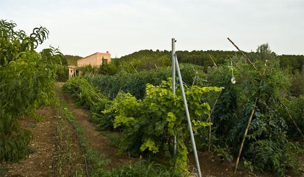 nuestro huerto